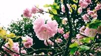 17-04-17-04-17-00-983_deco.jpg
